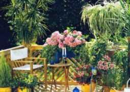 Комнатные цветы по гороскопу