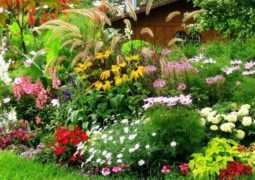 Как разбить красивый цветник — советы от школы дизайна