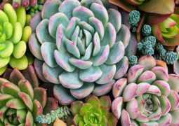 9 растений для привлечения денег, любви и процветания